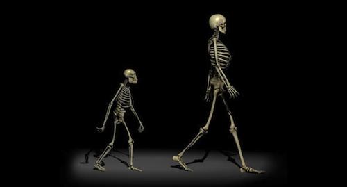 Human-odyssey-skeletons-500