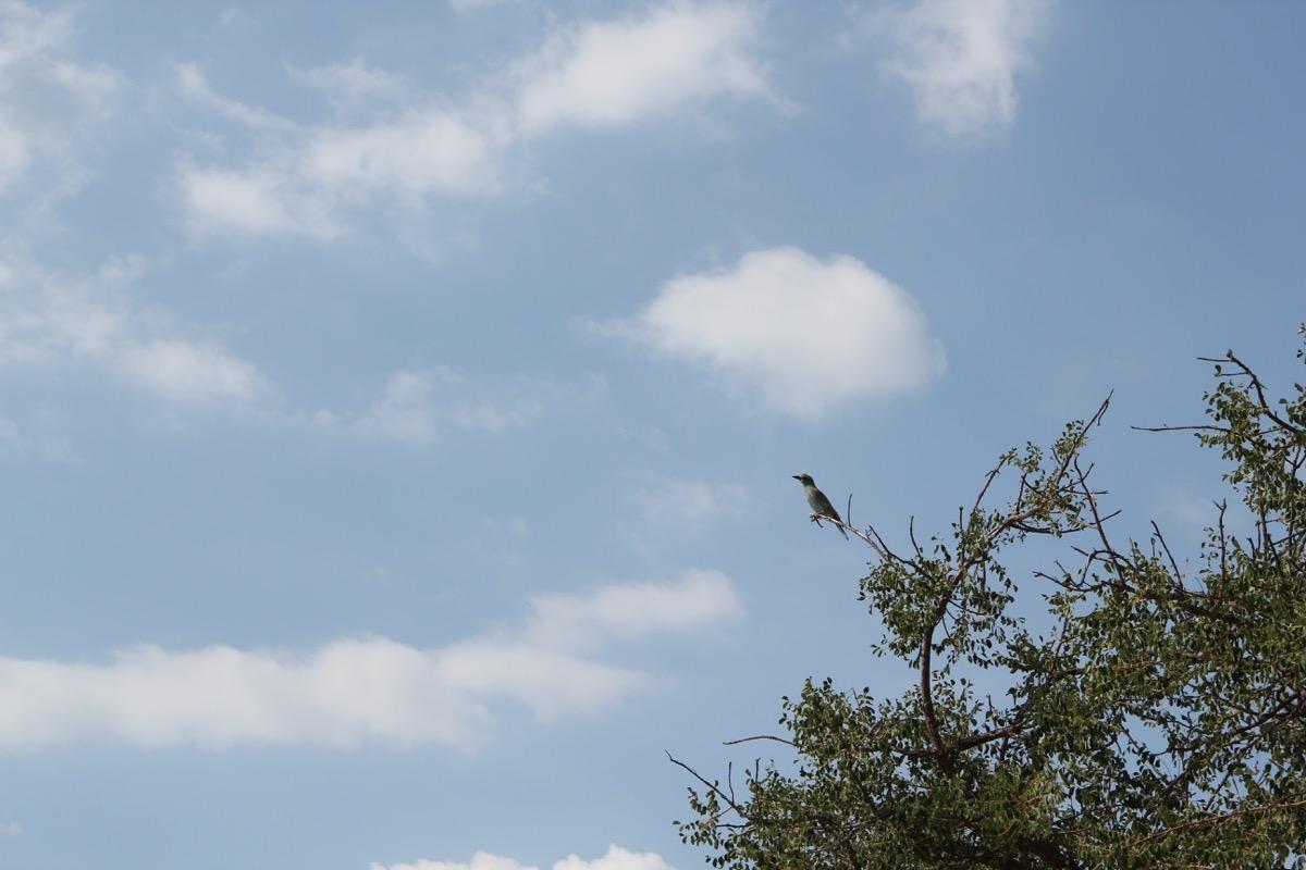Roller bird-1200